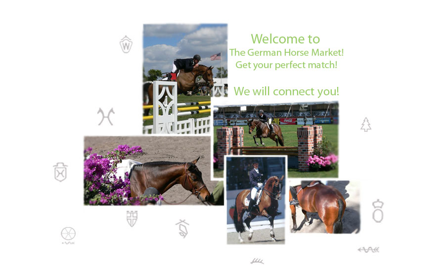 German Sporthorse Consulting